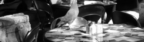 table for one :: visual dare #17